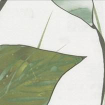 Deco 1 - Luxaflex Translucent Colours Roller Blind | 7532 Rosate